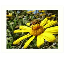 Bumble Bee II Art Print
