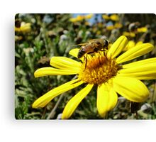 Bumble Bee II Canvas Print