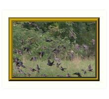 Cowbirds are in This Flock Art Print