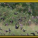 Cowbirds are in This Flock by Starr1949