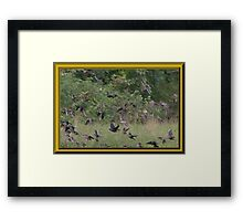 Cowbirds are in This Flock Framed Print