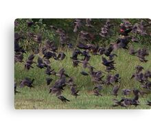 There Were RedWings Too Canvas Print