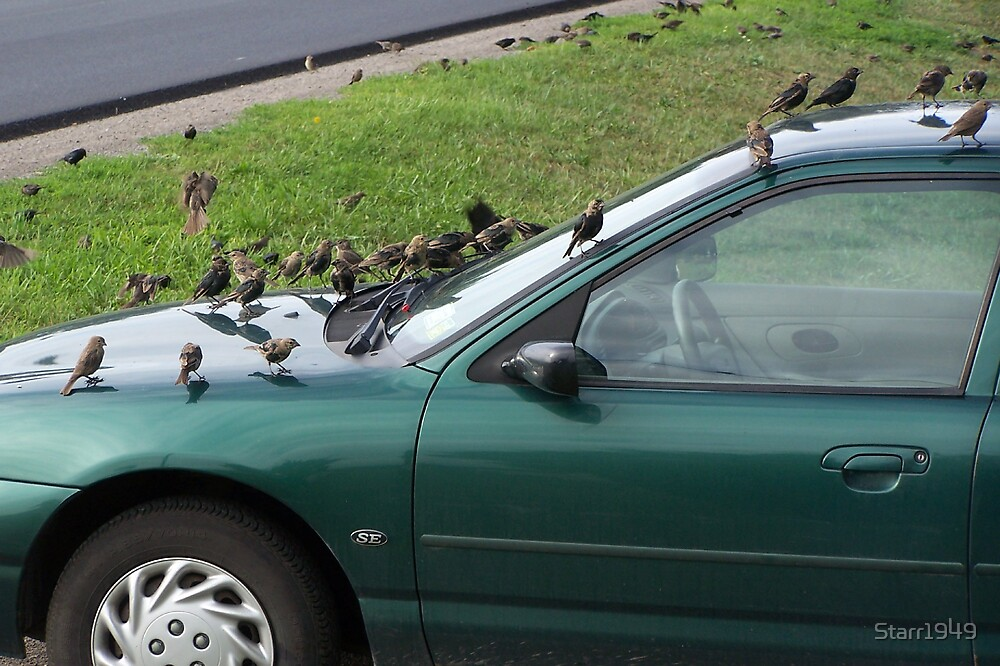 Hood Ornaments and Roof Too by Starr1949
