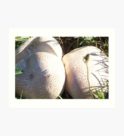 Puff Ball Fungi Art Print