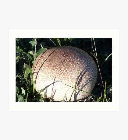 Puff Ball Fungus Art Print