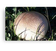 Puff Ball Fungus Canvas Print