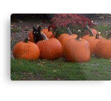 Keeper of the Pumpkins  Metal Print