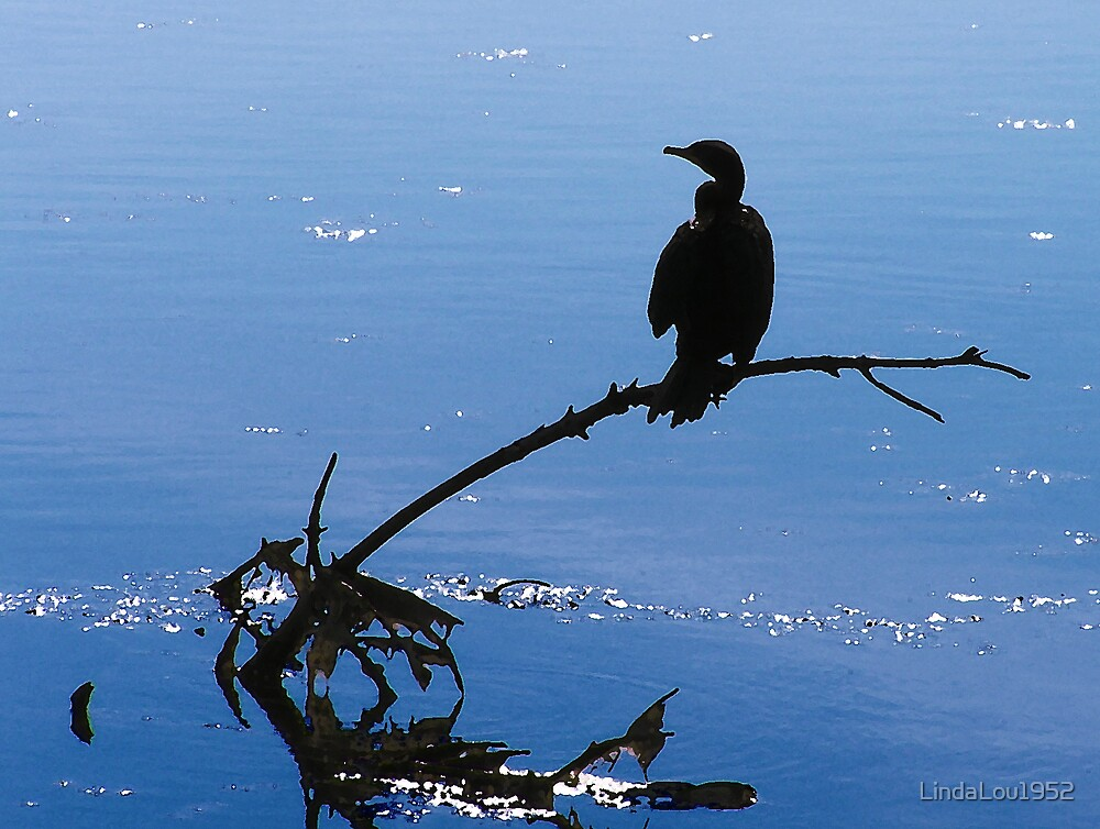 Unknown bird on driftwood by LindaLou1952