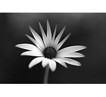 BW Flower Photographic Print