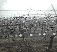 Mudgee Mist by Nick Wormald