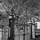 City Park, Launceston by John  Cuthbertson | www.johncuthbertson.com