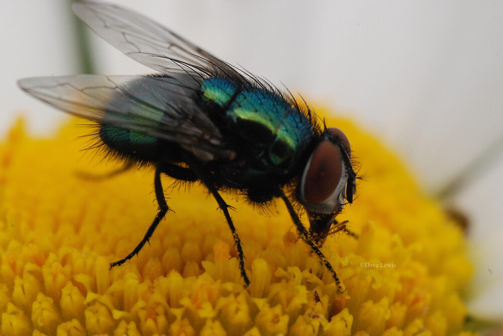 green fly by ukgun
