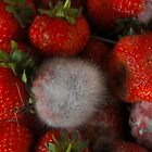 Strawberries by Clare Bentham