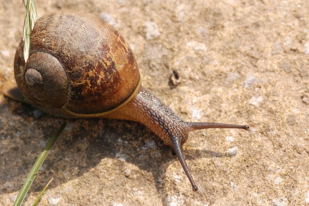 snail by ukgun