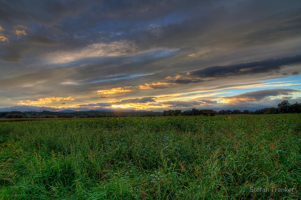 Sunflower Sundown by Stefan Trenker