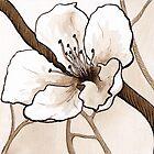 Spring Cherry Blossom by Kathryn Nicholas