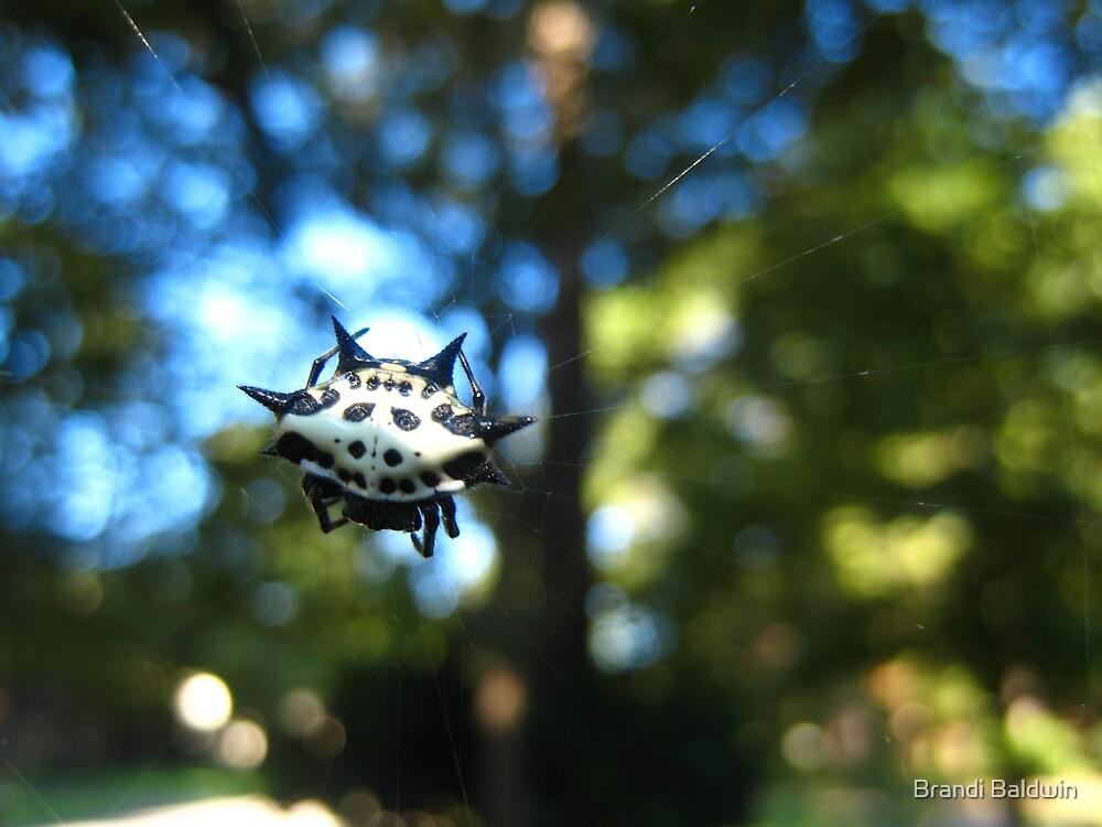 Crab Spider by Brandi Baldwin
