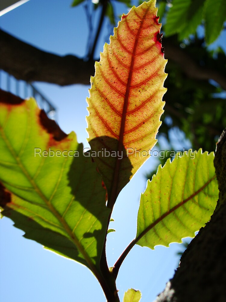 The light of this leaf by Rebecca Garibay Photography