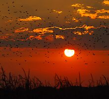 Sunrise Migration II by Karen Goad
