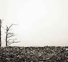 Rock Garden by David Librach - DL Photography -