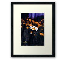 A Daisy Alone Framed Print