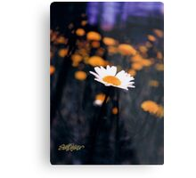 A Daisy Alone Metal Print