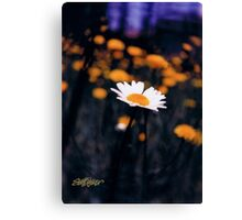 A Daisy Alone Canvas Print