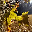 Green sweet gum leaves and Spanish moss in sunlight by Nadia Korths