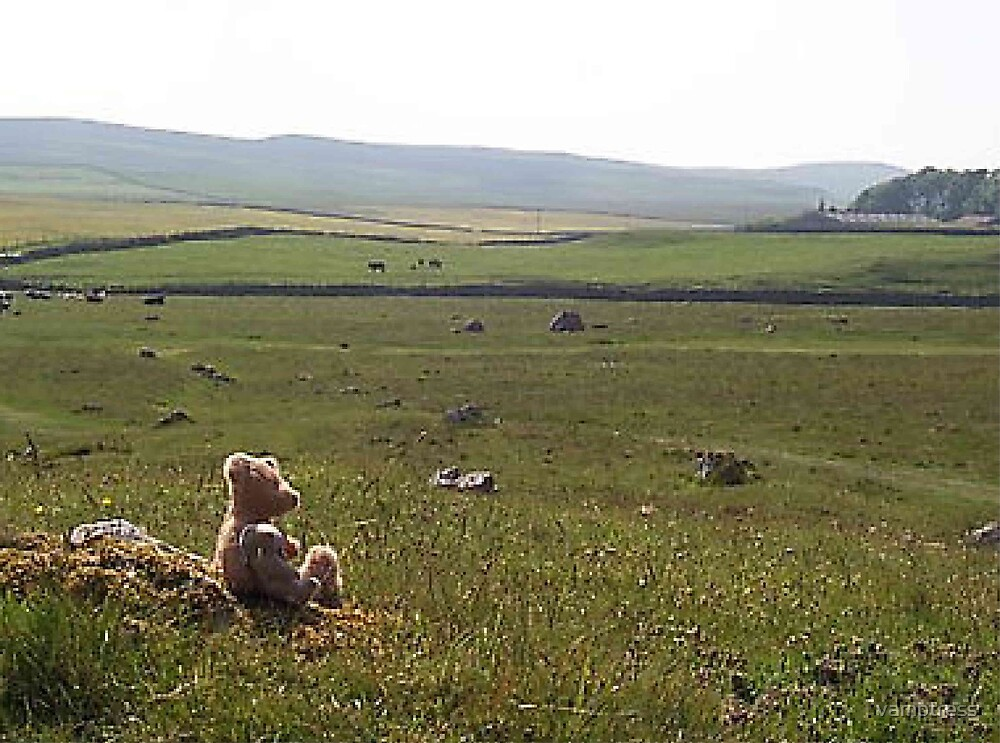 teddy in the dales by vamptress
