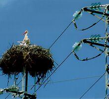 Stork's Nest by migueldelmonte