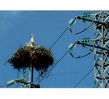 Stork's Nest Photographic Print