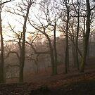 Foggy Hillside wood by KMorral