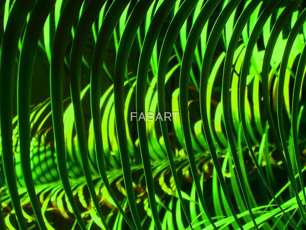 Ferns by FABART