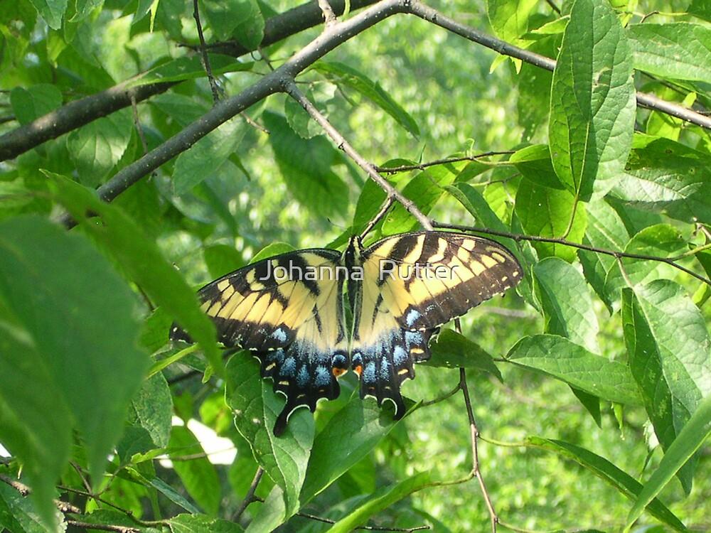 Butterfly in Tree by Johanna  Rutter