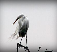 Snowy Egret by mockbird