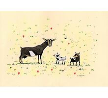 A Doe & Her Kids Photographic Print