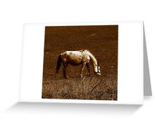 BAD SHAPE HORSE Greeting Card