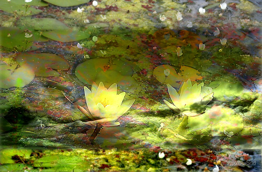 Water lillies by marijkasworld