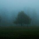 Apple Tree in Fog by Mary Ann Reilly