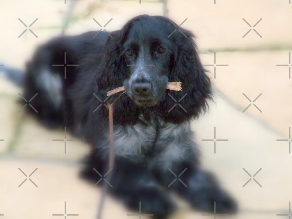 puppy love by karl  lee