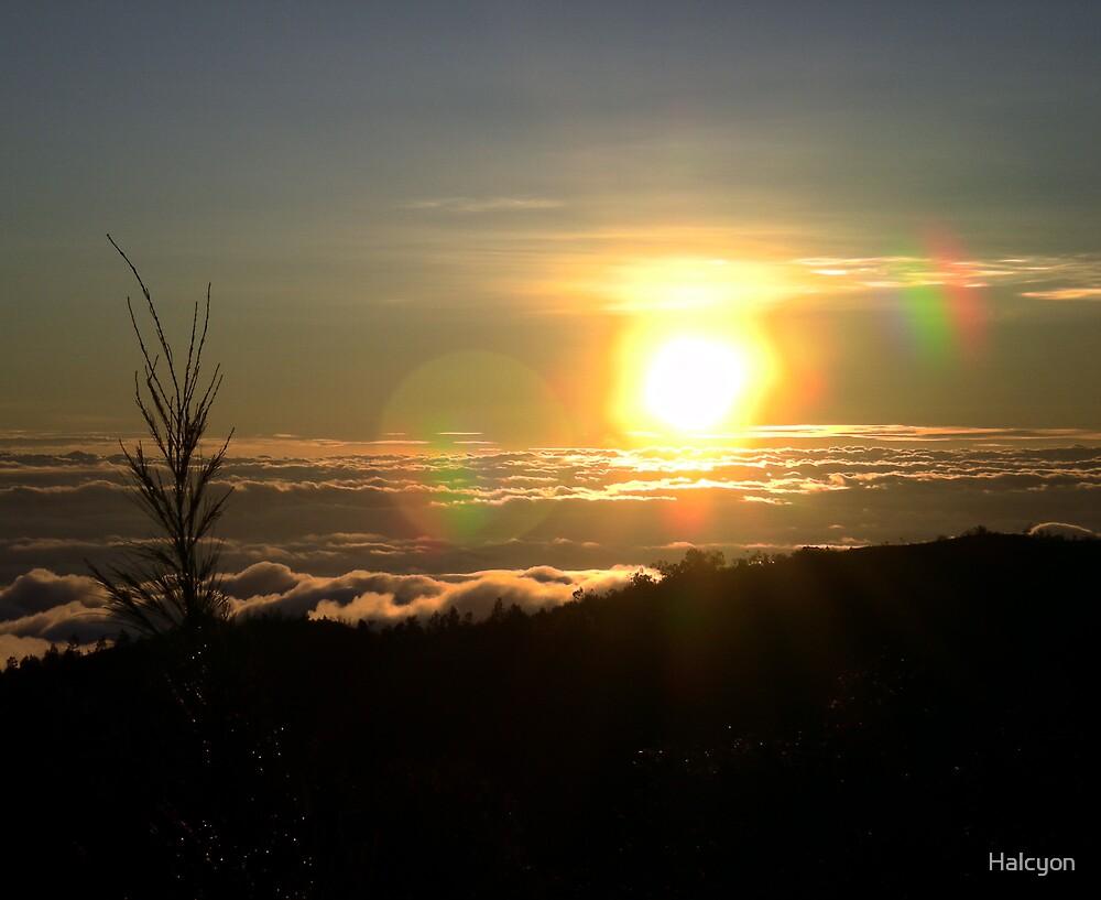 Sunrise by Halcyon