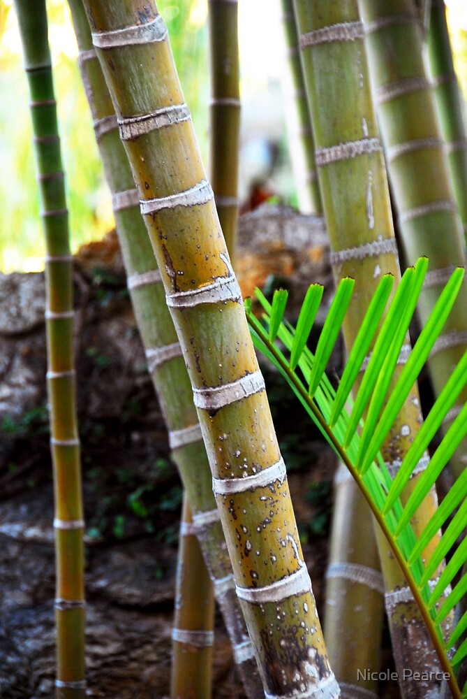 Bamboo garden by Nicole Pearce
