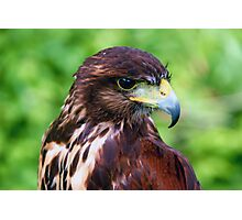 Falcons Eye Photographic Print