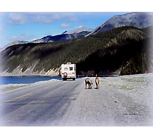 Alaska Canadian Highway Photographic Print