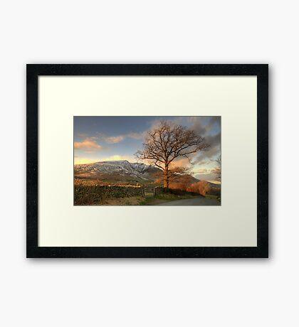 Blencathra and Tree Framed Print