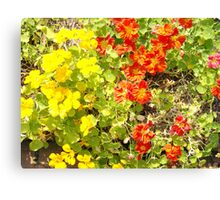 Orange and Yellow Summer Flowers Canvas Print