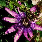 Painted Passion Flower by kalliope94041