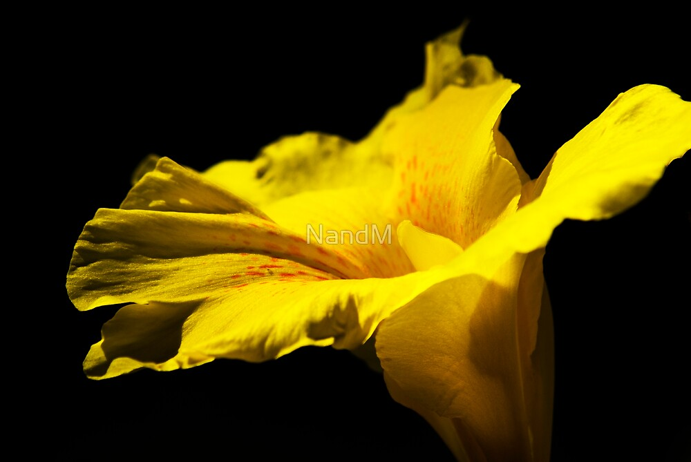 Yellow Flower by NandM