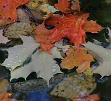 fall leaves in a brook by Monica31