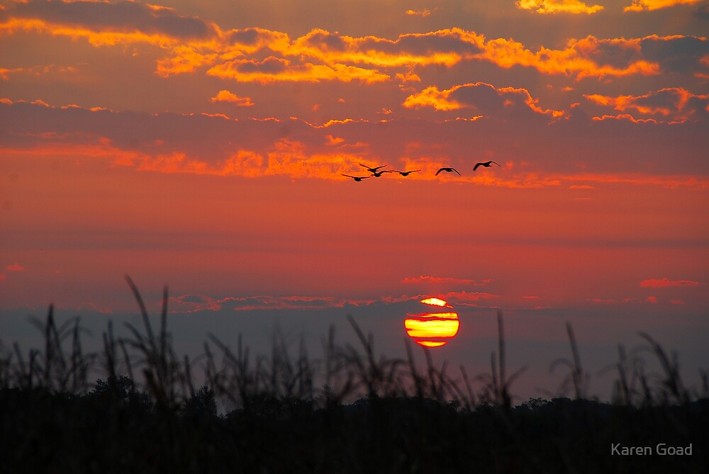 Sunrise Migration by Karen Goad